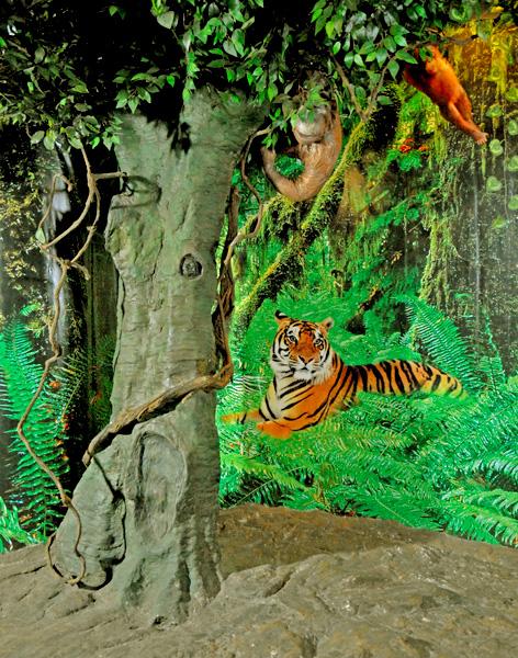 Asian Tropical Rainforest 67