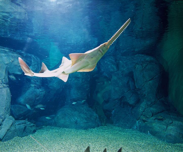壁纸 海底 海底世界 海洋馆 水族馆 724_600