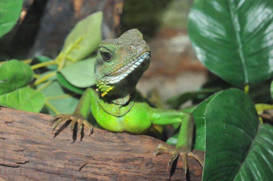 这是一种非常古老的动物,在地球上已生存了4亿年之久,(比恐龙还要早出