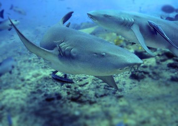 壁纸 动物 海底 海底世界 海洋馆 水族馆 鱼 鱼类 569_401
